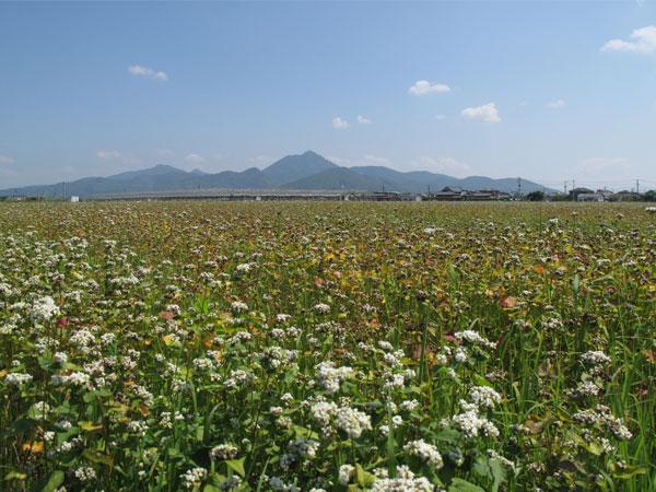 熊本の春蕎麦